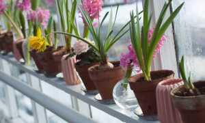 Что нужно знать о луковичных растениях