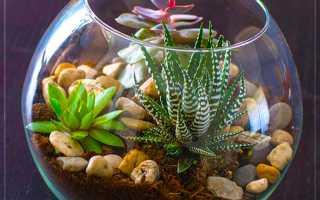 Суккуленты во флорариуме