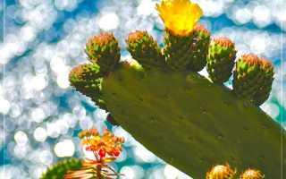 Размножить комнатные растения