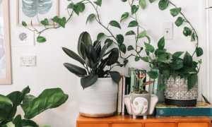 Уход за растениями на подоконнике