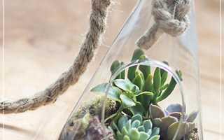 Суккуленты в стеклянной вазе