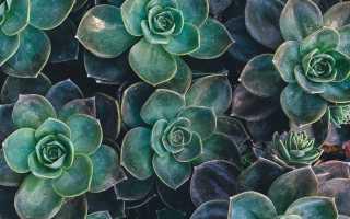 Суккуленты — способ оживить помещение