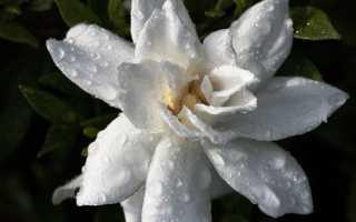 Неприхотливые домашние цветы