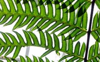 Растения в интерьере – ботанический стиль