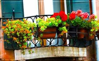Горшки для цветов на балкон