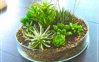 Флорариум из кактусов и суккулентов