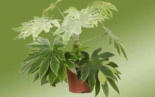 Нецветущие комнатные растения