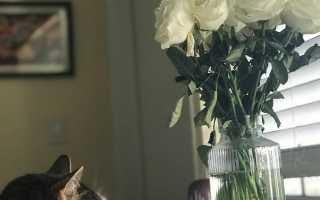 5 простых правил для комнатных роз