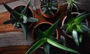 3 популярные комнатные растения