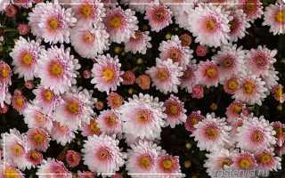 Почему гибнут цветы в квартире