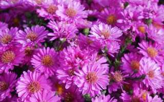 5 видов цветов для осеннего сада