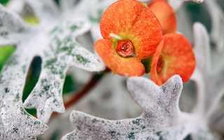 6 материалов для укрывания растения на зиму