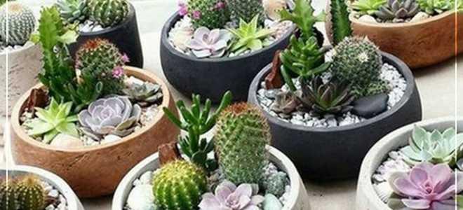 Как поливать кактус в домашних условиях