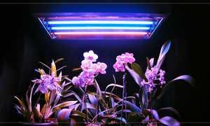 Освещение растений в домашних условиях