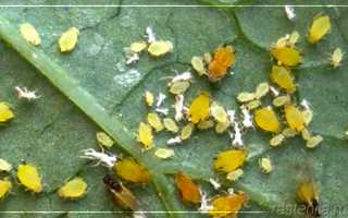 Мошки в земле комнатных растений