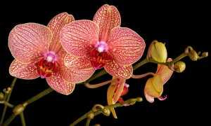 Комнатные растения цветущие зимой