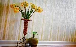 Композиции из комнатных растений