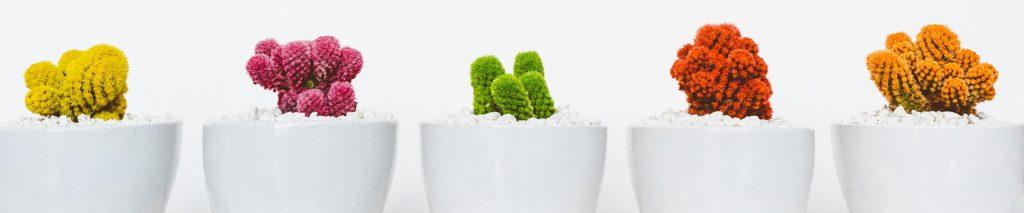 Как пересаживать кактус шаг за шагом