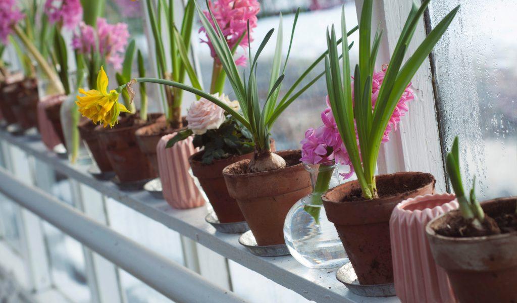 Цветочные луковичные растения