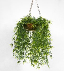 Правила по уходу за комнатными растениями