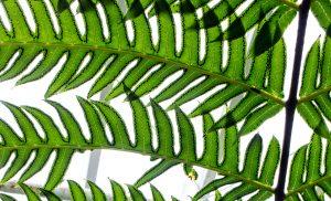 растение фото