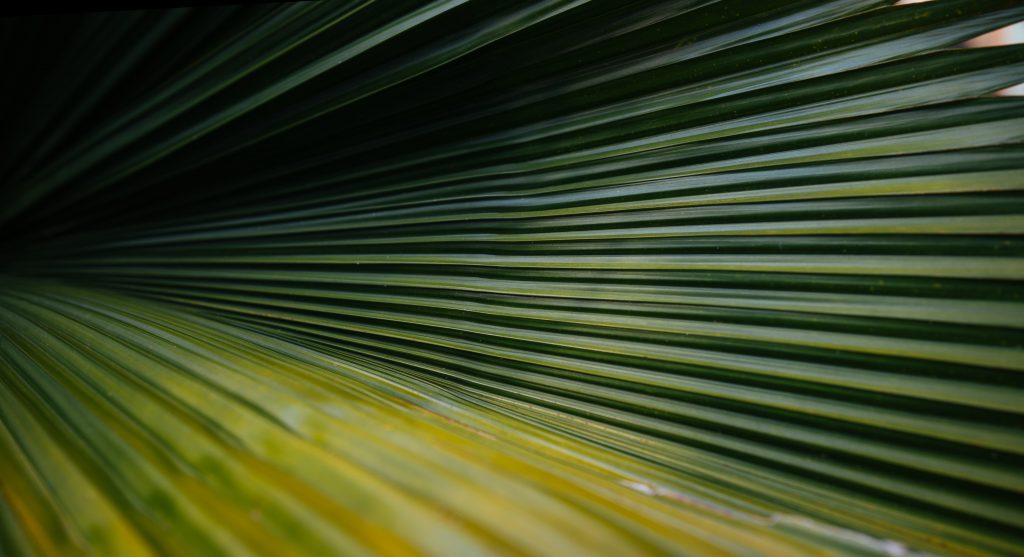 Пальма домашняя разновидности названия