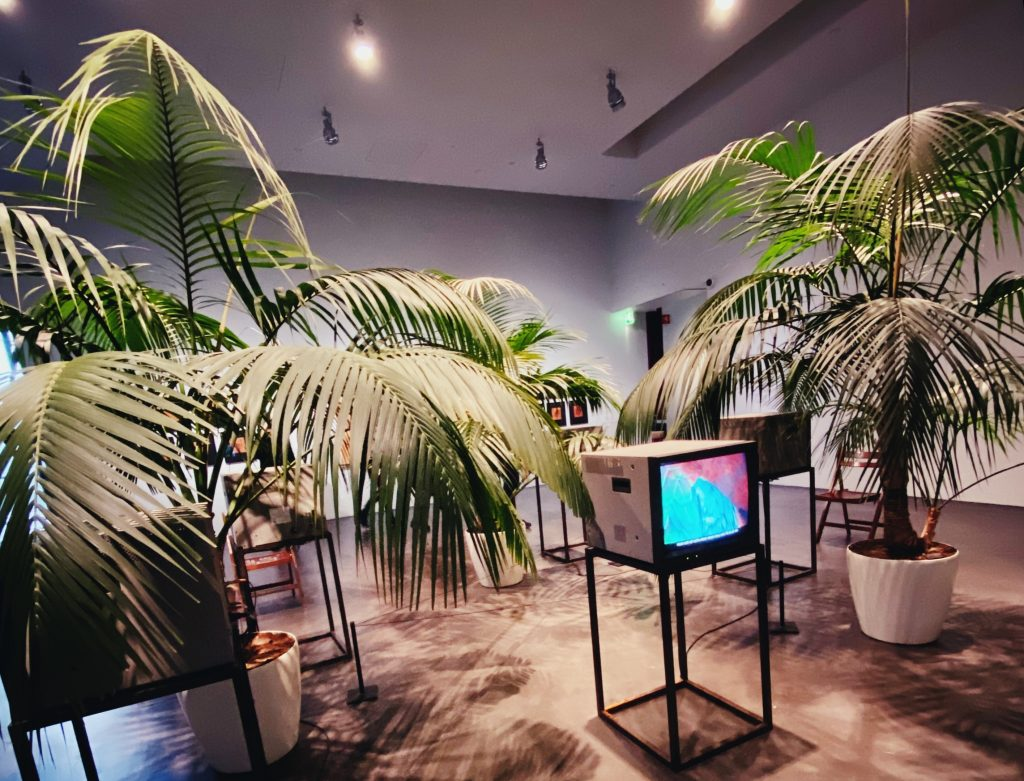 Пальма домашняя фото