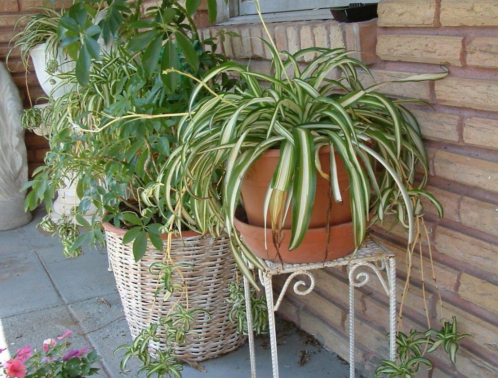 Красивые растения для дома