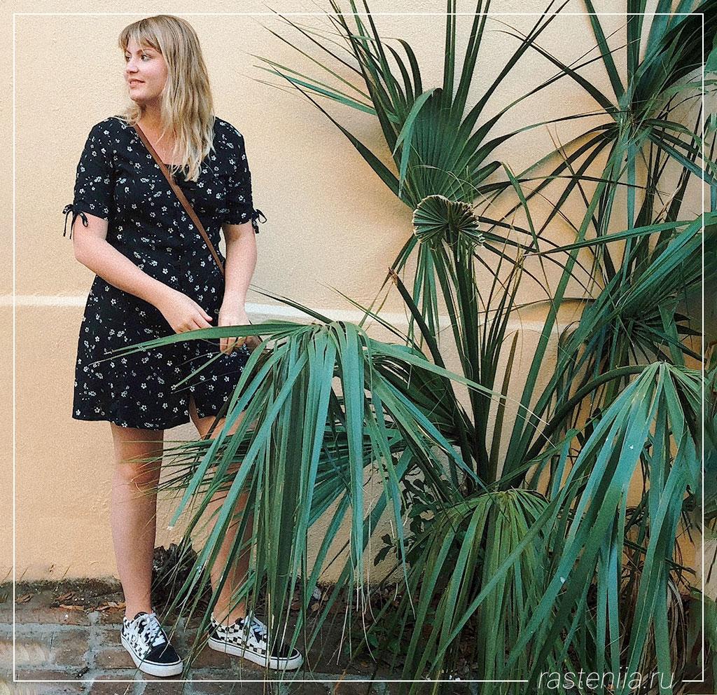 Большие домашние растения — Пальма