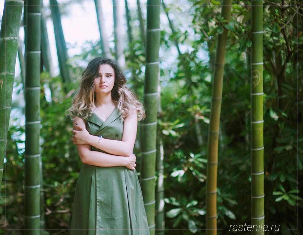 Как размножить бамбук