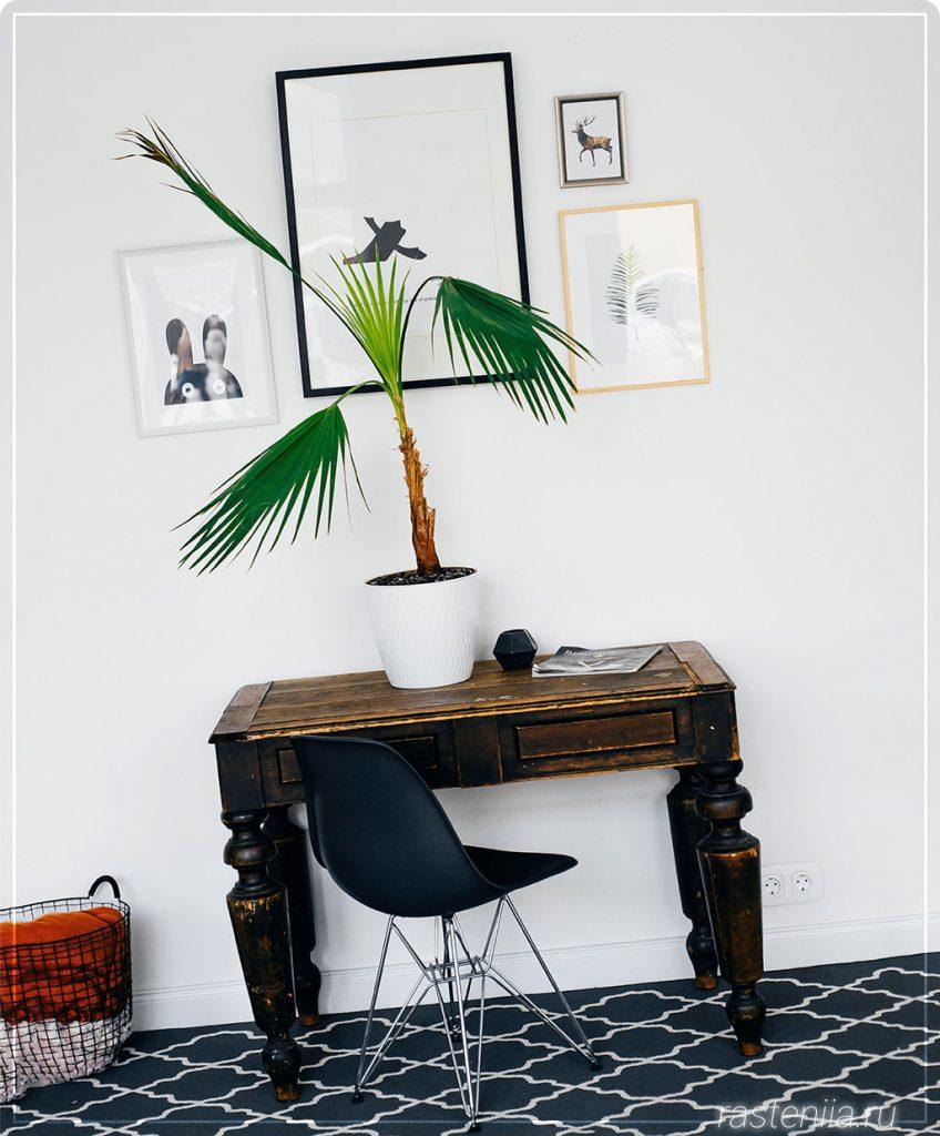Композиции комнатных растений