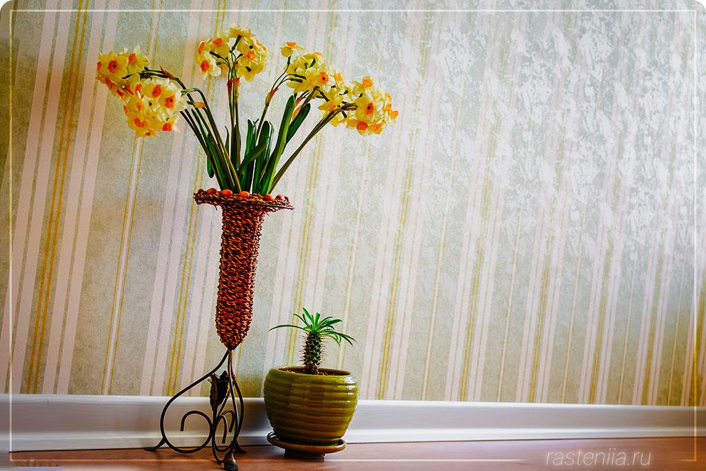 Создание композиций из растений в горшке