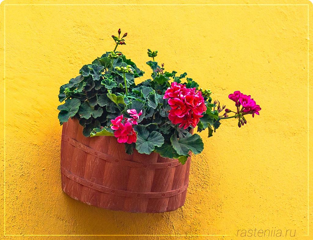 Цветы в горшках в подарок
