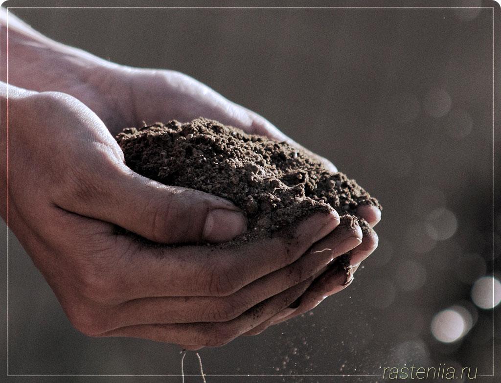 Удобрения для домашних растений
