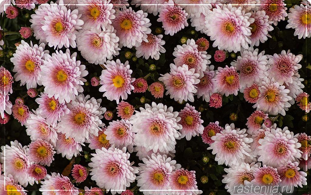 Гибнут цветы в квартире