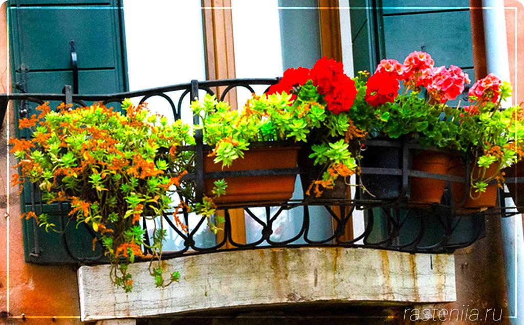 Подвесные горшки для цветов