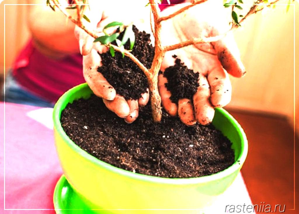 биопрепараты для защиты растений от вредителей